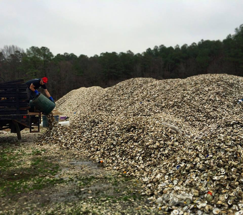 Oyster Recovery Partnership oyster shells